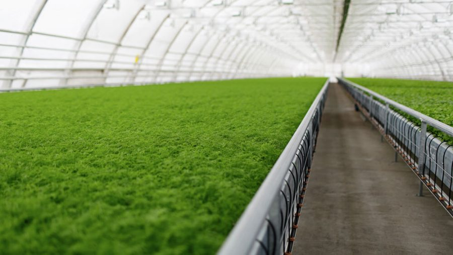 Why Commercial Farming is an Advantage to the UAE Economy
