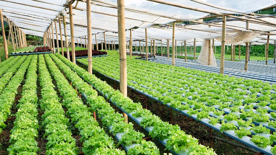 Vertical and Hydroponic Types of Farming